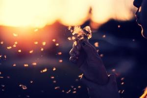 flor ao vento weheartit